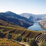 Terraços do Douro